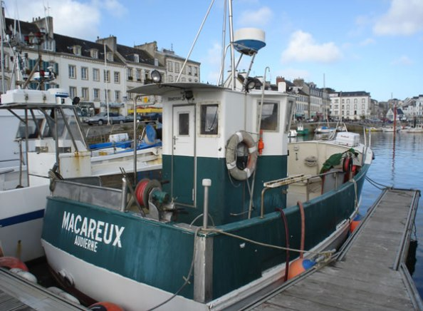 Macareux (AD584873 )